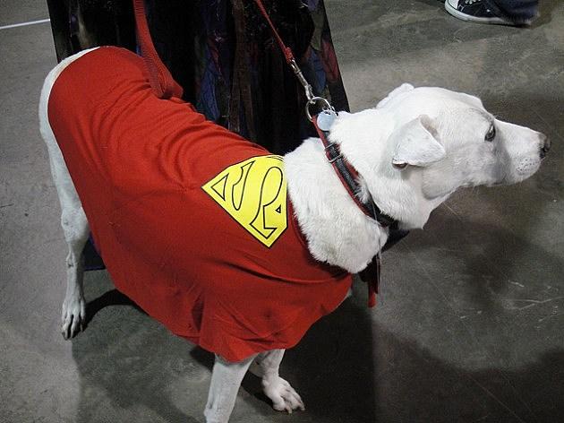 dog wearing superman cape