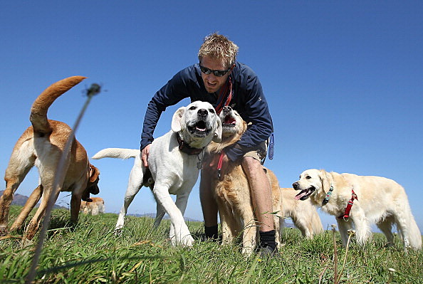 San Francisco Seeks To License Professional Dog Walkers